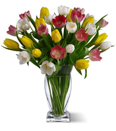 True love tulips blooming elegance in yakima wa is a
